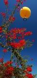 Czerwony kwiat i kolor żółty balon obraz royalty free
