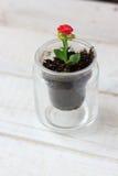 Czerwony kwiat kalanchoe - mała domowa roślina Obraz Stock