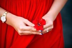 czerwony kwiat kobiecej ręki Obraz Royalty Free
