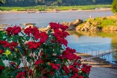 czerwony kwiat Mekong rzeka i góry Lato Laos Luang Prabang Zdjęcie Stock