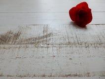 Czerwony kwiat na białym drewnianym tle Fotografia Royalty Free