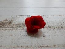 Czerwony kwiat na białym drewnianym tle Zdjęcia Royalty Free