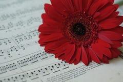 Czerwony kwiat na muzykalnych notatkach Zdjęcie Royalty Free
