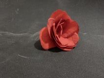 Czerwony kwiat na popielatym tle Zdjęcie Royalty Free