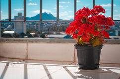 Czerwony kwiat na zimie fotografia royalty free