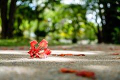 Czerwony kwiat spadać na podłoga w lesie Zdjęcia Stock