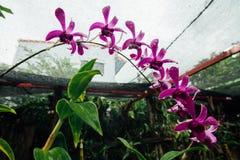 Czerwony kwiat w mokrej dżungli podczas pory deszczowa obraz royalty free