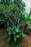 Czerwony kwiat w mokrej dżungli podczas pory deszczowa zdjęcia stock