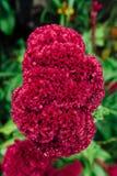 Czerwony kwiat w mokrej dżungli podczas pory deszczowa obrazy royalty free