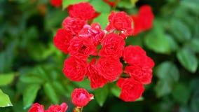 czerwony kwiat w ogrodowym //beautiful kwiacie obraz stock