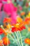 Czerwony kwiat w parku, kolorowy kwiat zdjęcie stock