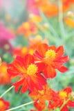 Czerwony kwiat w parku, kolorowy kwiat zdjęcie royalty free