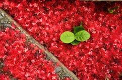 czerwony kwiat zielonych liści Obraz Royalty Free
