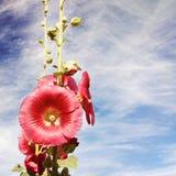 Czerwony kwiatu okwitnięcie Obrazy Stock
