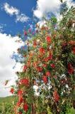 Czerwony kwiatu spadek na niebie Obrazy Royalty Free