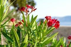 Czerwony kwiatu stillife z morzem Zdjęcia Stock
