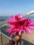 Czerwony leluja kwiat przy morzem Srilanka obraz stock