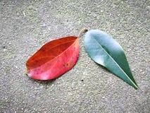 Czerwony liść i zieleń leaf na ziemi Obraz Stock