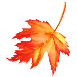 Czerwony liść klonowy jako jesień symbol Zdjęcia Royalty Free