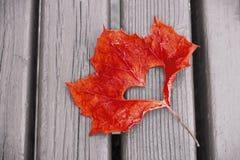 Czerwony liść klonowy z cięciem za sercu na w górę drewnianego tła, jesieni tło zdjęcia stock