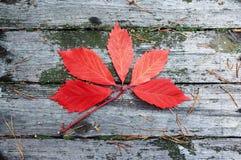 Czerwony liść na starych deskach Zdjęcia Stock