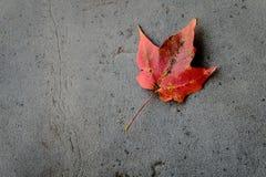 Czerwony liść na ziemi Fotografia Royalty Free