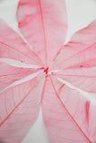 Czerwony liść struktury tło Zdjęcia Royalty Free
