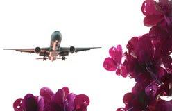 Czerwony liścia Warbler samolotu bielu tło Fotografia Stock