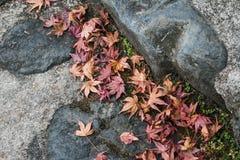 Czerwony liścia klonowego spadek na ziemi, Kyoto, Japonia Obrazy Royalty Free