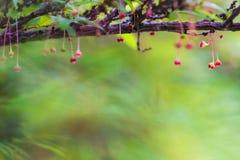 czerwony małe kwiaty Zdjęcie Stock