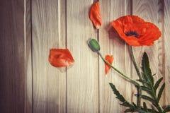 Czerwony maczek - czerwony kwiat na drewnianym Fotografia Stock