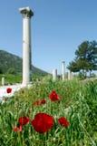 Czerwony maczek i antyczne rzymskie kolumny na tle w Ephesus, Zdjęcie Royalty Free
