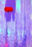 Czerwony maczek na purpurowym kolorowym rocznika tle Zdjęcie Royalty Free