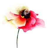 Czerwony makowy kwiat Obrazy Stock