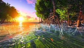 Czerwony mangove brzeg Zdjęcie Royalty Free