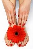 Czerwony manicure i pedicure z kwiatem Zdjęcie Stock