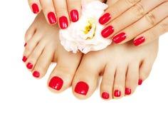 Czerwony manicure i pedicure z kwiatem zamkniętym w górę, odizolowywający na białym tle zdjęcie royalty free