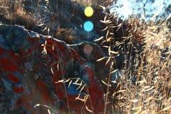 Czerwony mech Fotografia Royalty Free