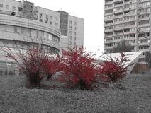 Czerwony Moskwa, czerwona jesień, czerwony wrażenie obraz stock