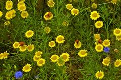 Czerwony motyl żółci kwiaty Zdjęcia Royalty Free