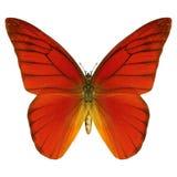 czerwony motyl Obraz Royalty Free