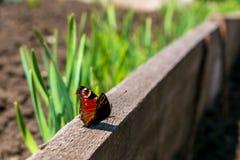 Czerwony motyl na blackboard na tle natura zdjęcia royalty free