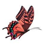 Czerwony motyli latanie Obraz Royalty Free