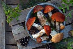 Czerwony nakrętka borowik na drewnianym tle Brown dzikie pieczarki Jadalny grzybowy Leccinum Aurantiacum zbierał w lasowym Surowy Zdjęcie Royalty Free