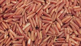 Czerwony nasiono Rice w masie zbiory wideo