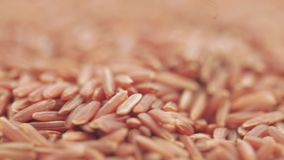 Czerwony nasiono Rice w masie zbiory