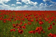 Czerwony naturalny dywan Fotografia Royalty Free
