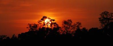 Czerwony niebo amazonki las tropikalny Zdjęcie Stock