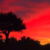 Czerwony niebo i przy puszkiem pojedynczy drzewo Zdjęcia Stock