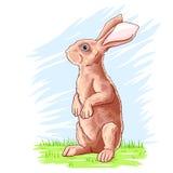 Czerwony obsiadanie w górę królika ilustracja wektor